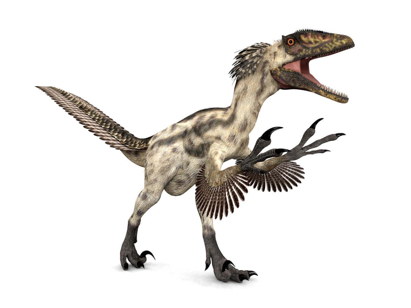 羽毛 ティラノサウルス ティラノサウルス毛が生えていた 茨城県自然博物館